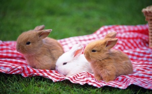 bunnies-bunny-cute-easter-picnic-Favim.com-209457